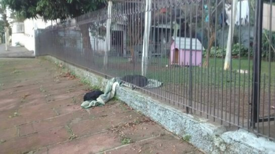 Dog drags her blanket to share with a homeless dog