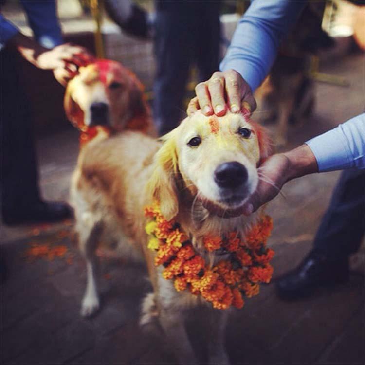 Hindu Tihar festival