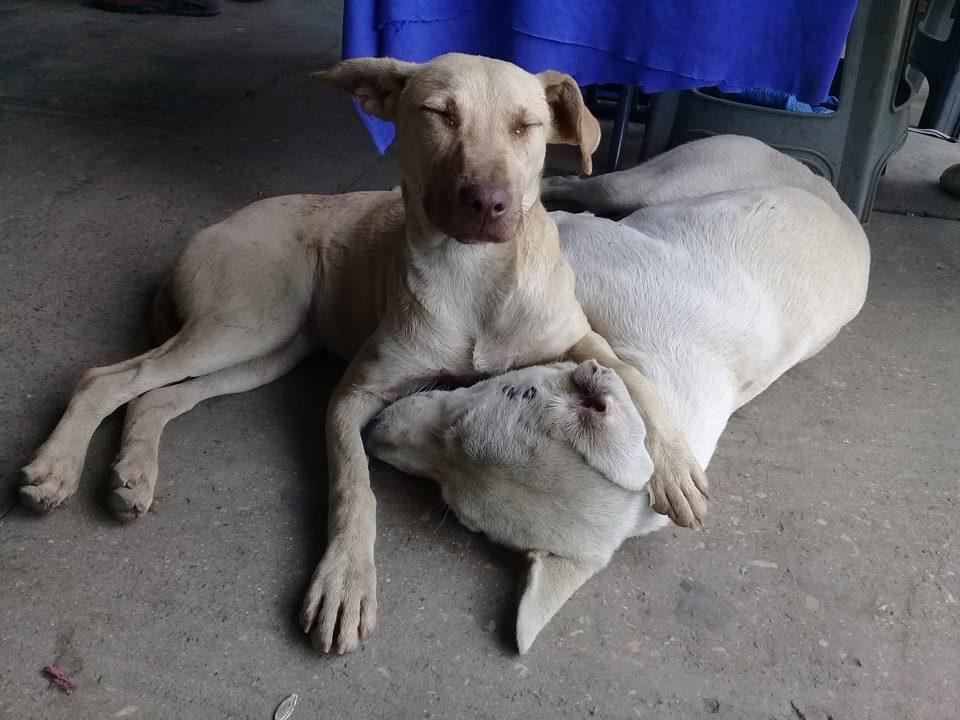 Dogs take refuge