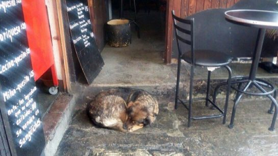 Restaurant owner defends a stray dog, with tooth and nail