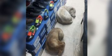 Shoe store allows stray dogs to sleep inside in the rain