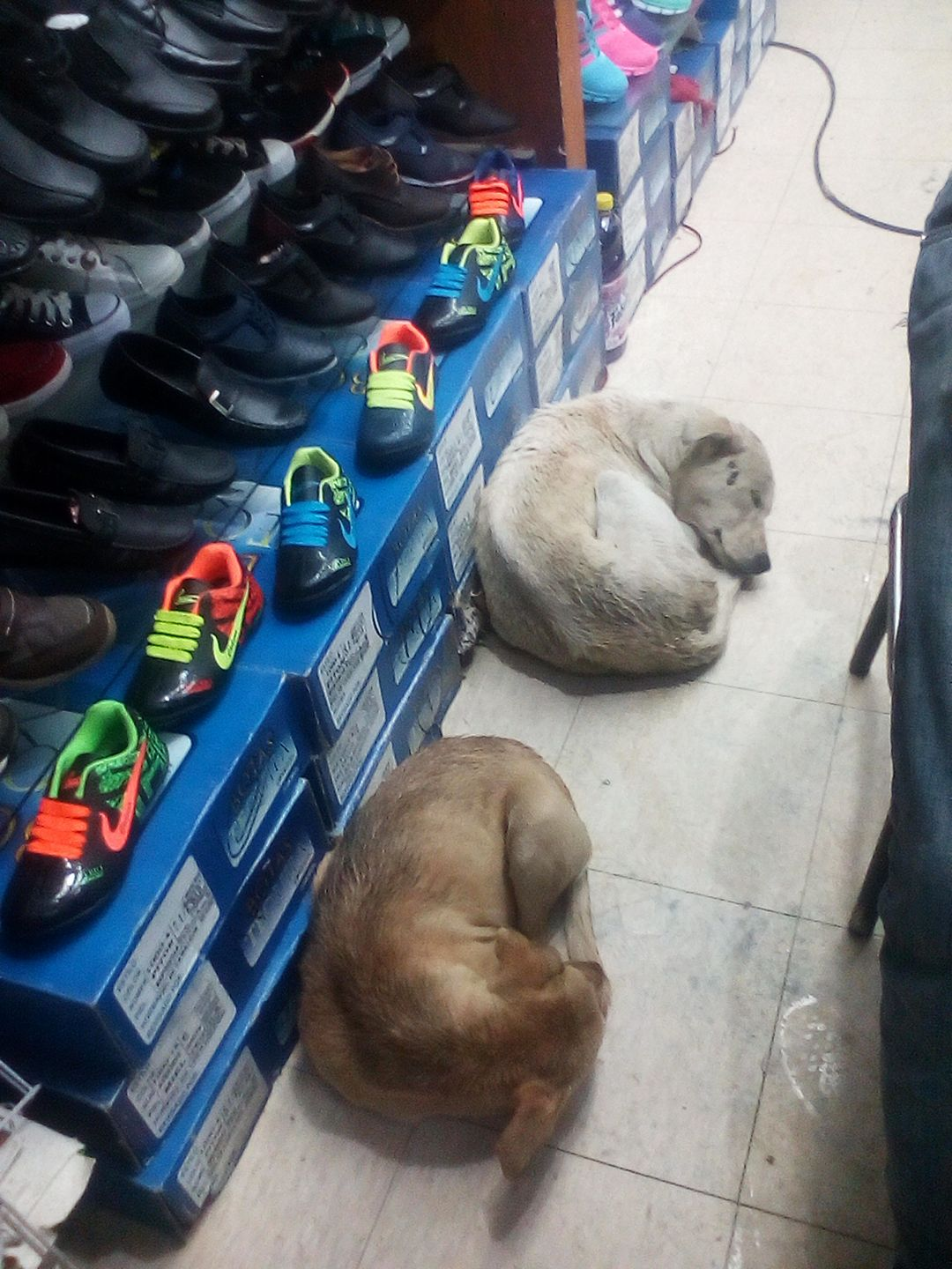 Two puppies take refuge in a merchants street business in the supply center