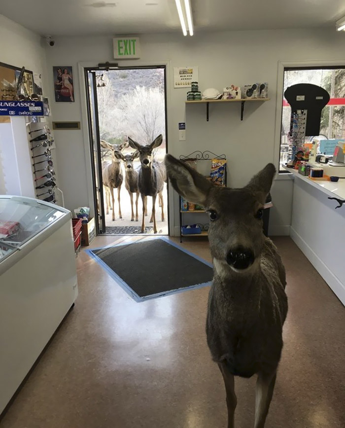 Deer takes family to gift shop
