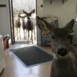 Family of deer in a gift shop