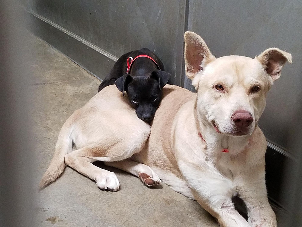 little dog abandoned will not leave his friend