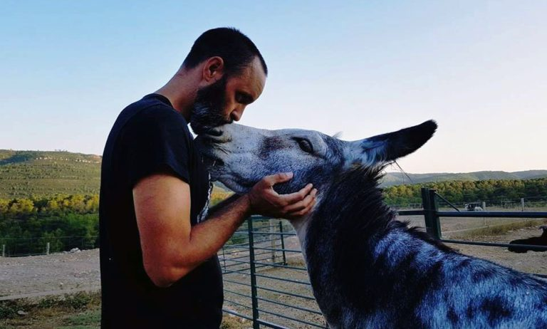 Loving donkey receives kisses from his caretaker
